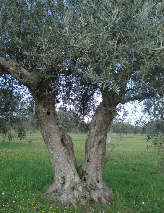 Chiaramonte_gulfi_foto_1