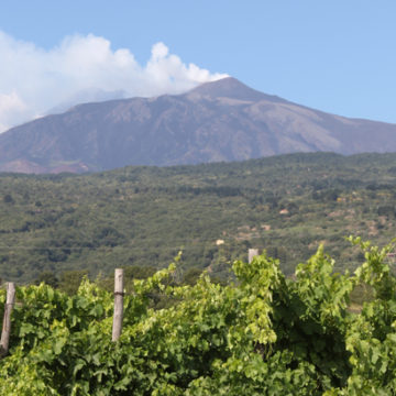 Etna,-vigneti,-winery-Vivera-012